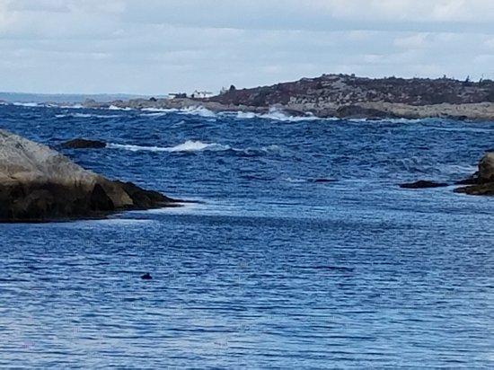 Peggy's Cove, كندا: 20161024_113802_large.jpg