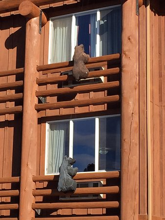 Kelly Inn West Yellowstone: Both brown and black bears trying to get into the rooms
