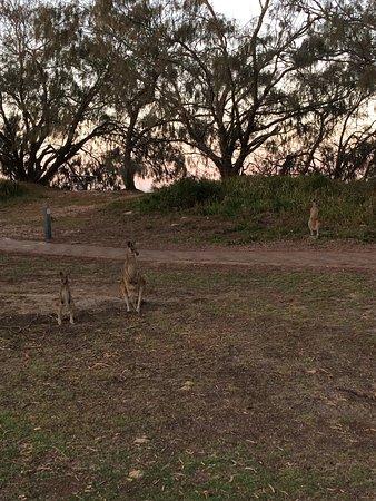 Woodgate, Australia: photo1.jpg
