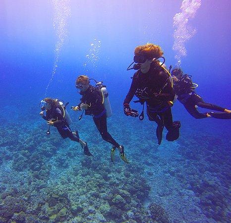Tikehau, Polynesia thuộc Pháp: our dive group