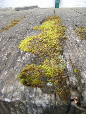McBride, Canada: Love the moss on the heritage wood of the loading dock