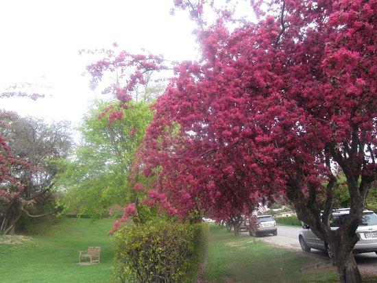 Arrowtown, New Zealand: A vila estava super florida, muito linda.