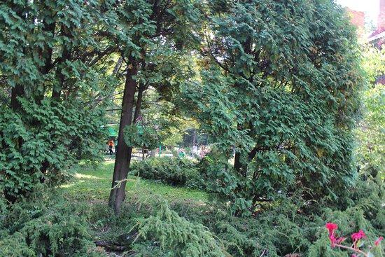 Ботанический сад-институт: красота и покой!