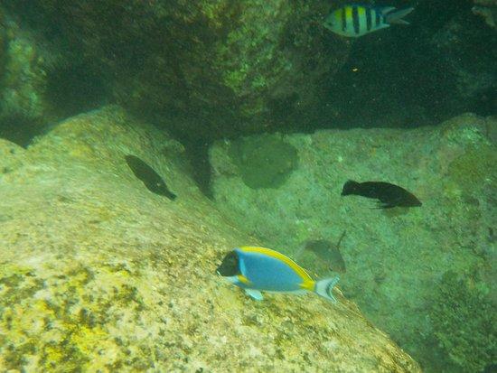 Ilha de Praslin Foto