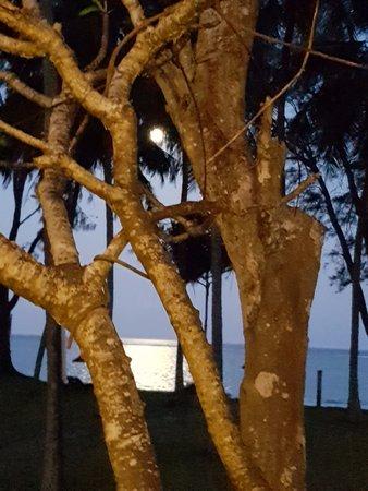 Diani Sea Lodge: Von meiner Terrasse gegen 18 Uhr bei Vollmond