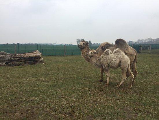 Zoopark Stezery