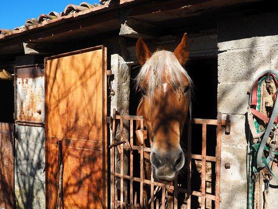Agriturismo Cognanello Photo