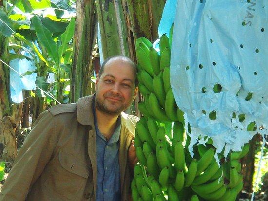 Quirigua, Γουατεμάλα: бананы