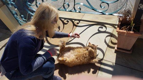 Villa Paradisa Guest House: Und die Hauskatze, wie Garfield