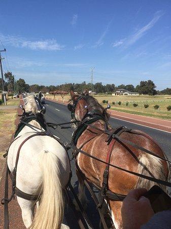 Belhus, Australia: Johnny (grey) & Toffee leading the way