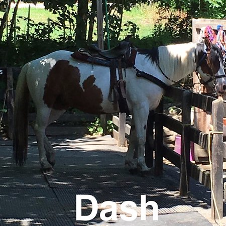 Saddle Up Stables: Dash I would never forget you, she was cute
