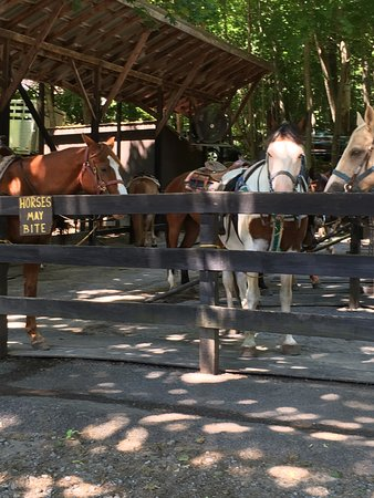 Saddle Up Stables: Some Beautiful Horses