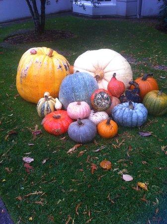 Bloedel Reserve: Pumpkins, squash, fall harvest