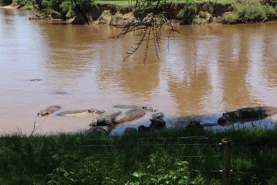 Mara River Lodge: View from Restaurant / Bar
