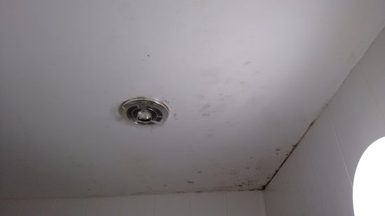 Gunnislake, UK: Damp on Bathroom ceiling room 8