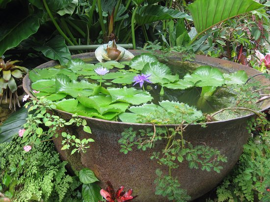 Hunte's Gardens: Good use for an old sugar boiling vat