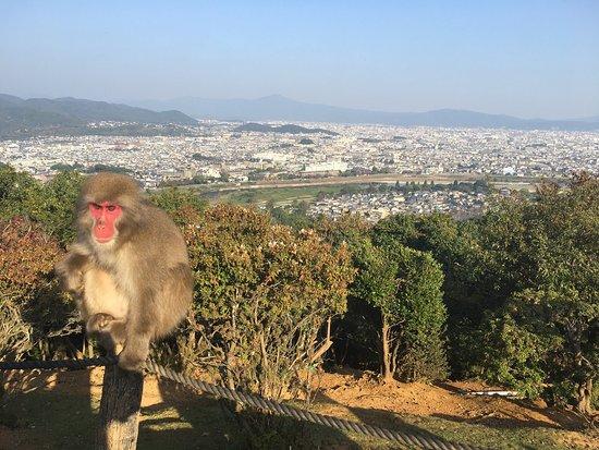 Overlooking Kyoto - Picture of Monkey Park Iwatayama ...
