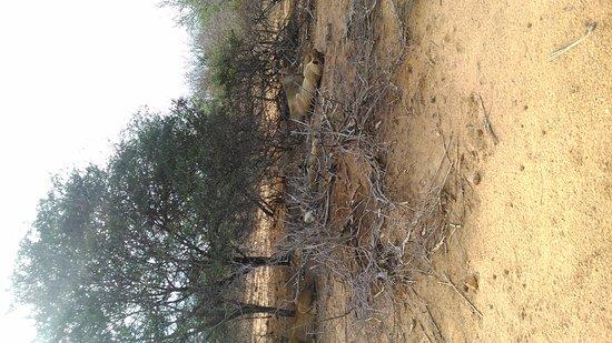 Kruger National Park: DSC_0049_large.jpg