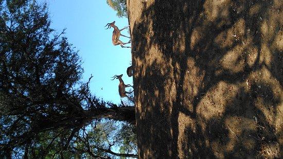Kruger National Park: DSC_0034_large.jpg