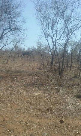 Kruger National Park: IMG-20161104-WA0003_large.jpg