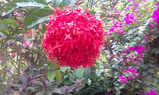 Club Mirissa: Flora in Garden