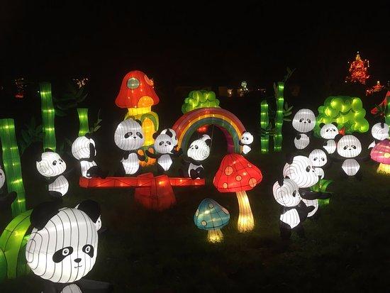 Hales Corners, WI: Pandas