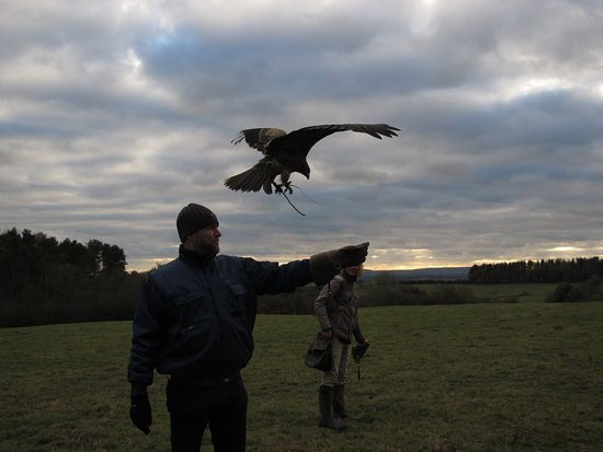 Herstmonceux, UK: Black Kite about to grab a morsel