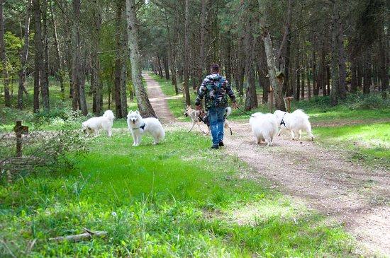 Masseria Chinunno: I dintorni dell'area picnic nello splendido Parco dell'Alta Murgia