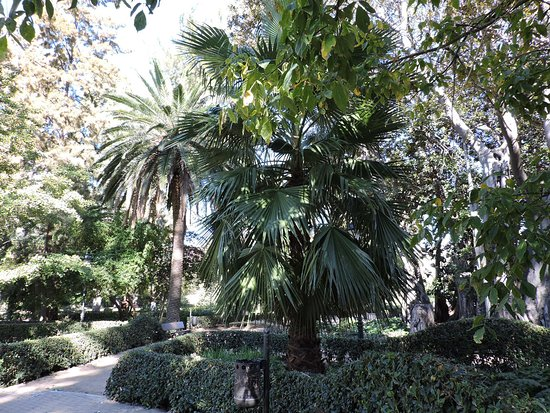 Jardín de Ayora, Valencia.