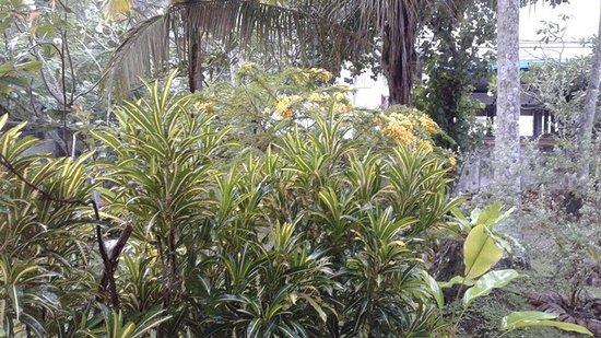 Club Mirissa: Lush Garden