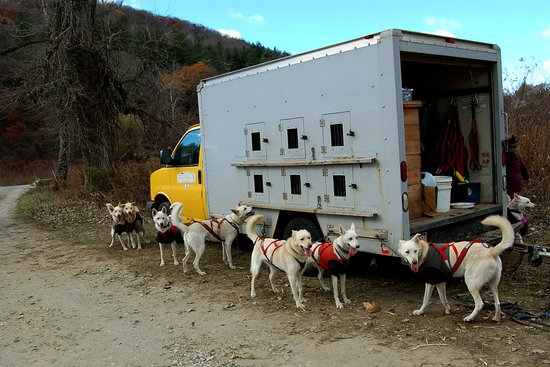 Chesterfield, Μασαχουσέτη: The dogs with the truck.