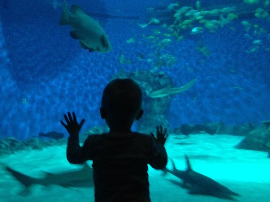 Den Bla Planet, National Aquarium Denmark: photo0.jpg