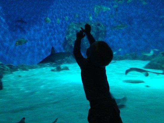 Den Bla Planet, National Aquarium Denmark: photo1.jpg
