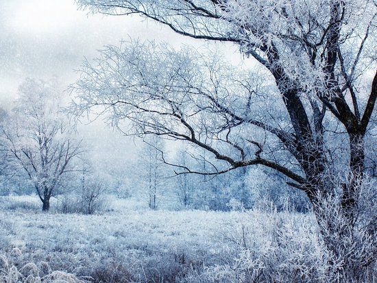 South Hill: Beautiful snow covered trees