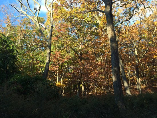 Eatontown, NJ: trail