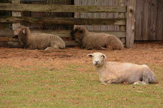 Manteo, NC: the farm animals were very cooperative