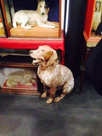morbid anatomy museum preserved pets