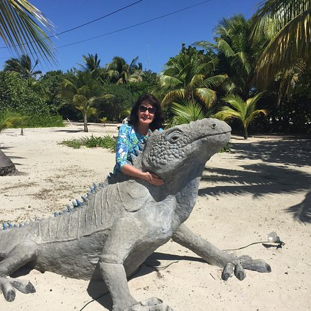 North Side, Grand Cayman: My pet iguana !