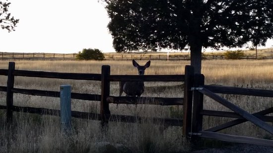 Zion Ponderosa Ranch Resort: Deer at dusk