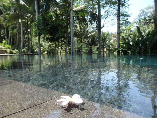 Kayumanis Ubud Private Villa & Spa: メインプール