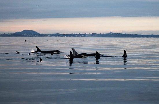 Cowichan Bay, Canada: Jpod