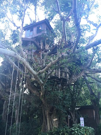 Pai Treehouse Photo