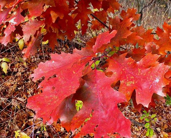 beautiful seasonal color