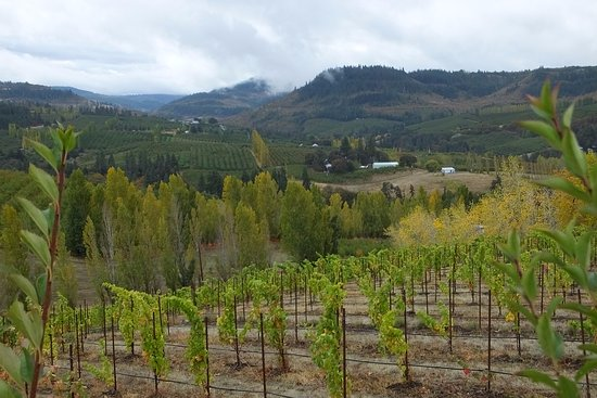 Mosier, Oregón: Vineyard views