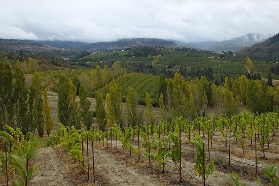 Mosier, OR: Vineyard views