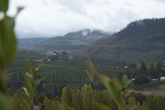 Mosier, OR: The rain can't defeat the views