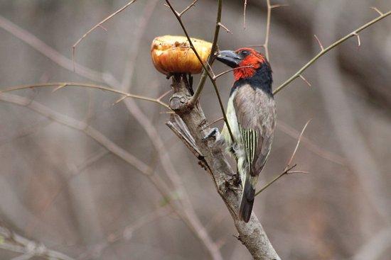 Jackalberry Ridge: bird life a plenty