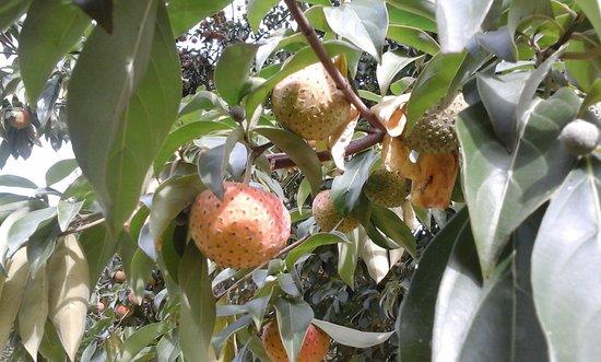 dogwood fruits jpg