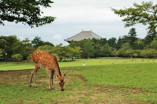 Nara Foto