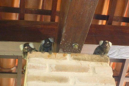 As Casinhas da Ada: les petits singes